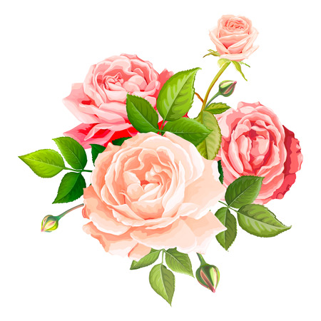 Beautiful bouquet flowers of pink and gentle peach blooming roses with leaves and buds, isolated on a white background. Lovely floral design element. Vector illustration in watercolor style Standard-Bild - 127180361
