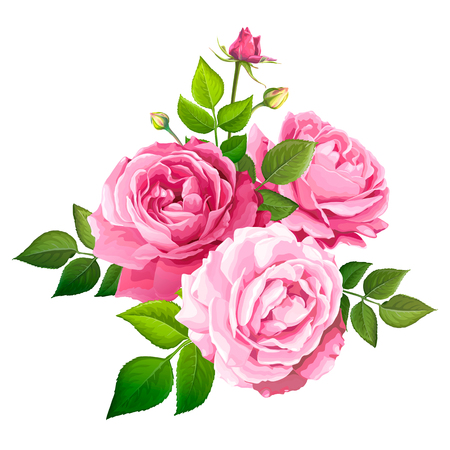 Beautiful bouquet flowers of pink blooming roses with leaves and buds isolated on a white background. Lovely floral design element. Vector illustration Illusztráció