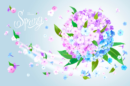 Beautiful floral background with blooming flowers of pink, lilac and light blue phloxes and green leaves. Inscription Spring on pastel sky blue background. Warm breeze carries tender flowers