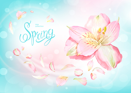 Beautiful floral background with blooming flowers of light pink Alstroemeria. Inscription Spring on pastel blue background. Warm breeze carries tender petals. Vector illustration.