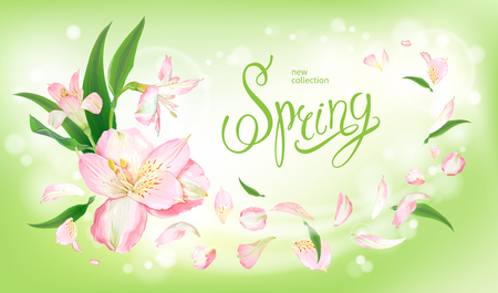 Beautiful floral background with blooming flowers of light pink Alstroemeria. Inscription Spring on pastel green background. Warm breeze carries tender petals and leaves. Vector illustration
