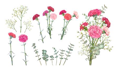 Legen Sie florale Vektorelemente für das Bouquet-Design fest. Rote und rosa Nelken, zartes weißes Gypsophila, Blätter von Eukalyptus Baby Blue Spiral. Ein Bündel mit Nelken ist ein Symbol für den Muttertagsurlaub