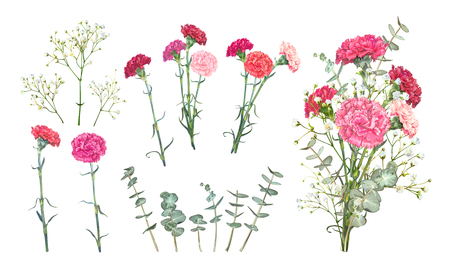 Set floral vectors elements for bouquet design. Red and pink carnations, tender white Gypsophila, leaves of Eucalyptus Baby Blue Spiral. Bunch with carnations is a symbol of Mothers day Holiday