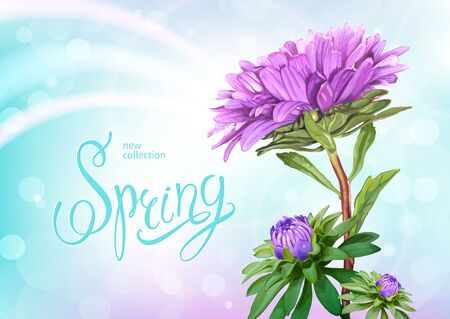 Beautiful floral background with blooming flowers of light violet Aster. Inscription Spring on pastel blue background. Vector illustration. Illustration