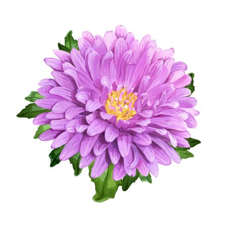 Beautiful summer flower of violet Aster isolated on white background for luxury floral design Ilustracja
