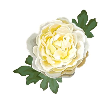 Beautiful summer flower of light yellow luxury peony isolated on a white background. Design element for floral design. Realistic vector illustration
