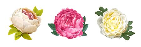 Set of three beautiful summer flowers of luxury peony isolated on a white background. Design element for floral compositions and bunches. Realistic vector illustration