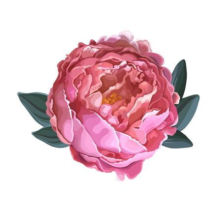 Beautiful summer flower of bright pink luxury peony isolated on a white background. Design element for floral design. Realistic vector illustration