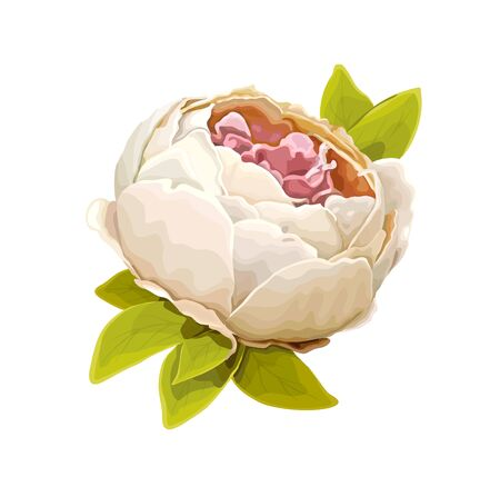Beautiful summer flower of light ivory luxury peony isolated on a white background. Design element for floral design. Realistic vector illustration 矢量图像