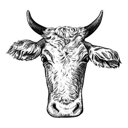 The head of a cow isolated on a white background. Hand-drawn vector illustration. Black and white sketch 矢量图像