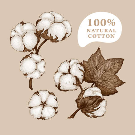 Set of different branches and cotton flowers isolated on a beige background. Hand drawn sketch. Floral composition. Vintage vector botanical illustration. Natural organic and eco concepts 矢量图像