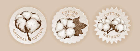 Set of three emblems in eco style with hand sketched cotton plant. Realistic labels different shapes with cotton flowers. Vector botanical illustration. Natural organic and eco concepts