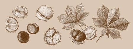 Set of different hand drawn leaves and fetus of chestnuts in shades of brown. Vector illustration in sketch style, botanical design elements isolated on a beige background