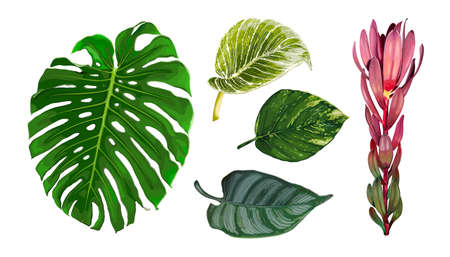 Set of different tropical leaves isolated on white background. Realistic vector illustration of Monstera, Epipremnum, Ctenanthe, Philodendron and Leucadendron plants. Botanical design elements