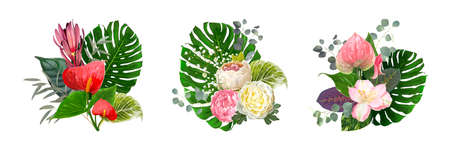 Set of luxury vector bouquets isolated on a white background. Blooming flowers of Anthurium, Paeonies, Leucadendron, tender Gypsophila among leaves of Eucalyptus, Monstera, Epipremnum, Ctenanthe