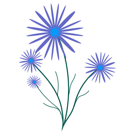aster: Small bouquet of cornflowers