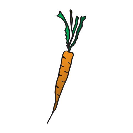 Cartoon carrots. Vector illustration. Drawing by hand Illustration