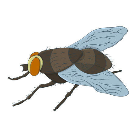 Colorful housefly Musca Domestica. Vector illustration. Drawing by hand
