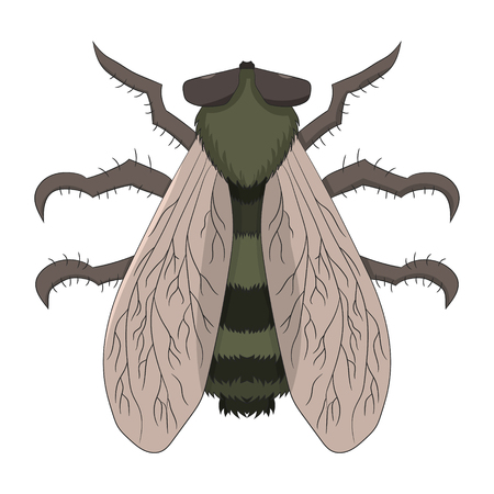 Big fly. The Tabanus. Vector illustration. Drawing by hand.