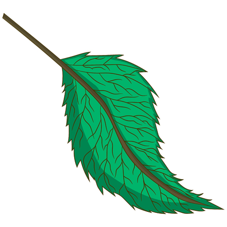 green leaf. vector illustration. Drawing by hand.