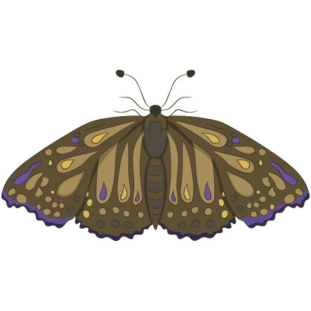 Brown moth. vector illustration. Drawing by hand.