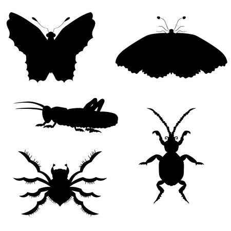 Set of silhouettes of insects. vector illustration. Drawing by hand. Illustration