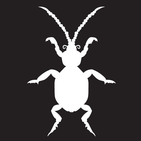 coleoptera: White beetle on a black forehead. vector illustration. Drawing by hand.