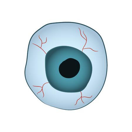 capillaries: Cartoon image of the eyeball on white background.