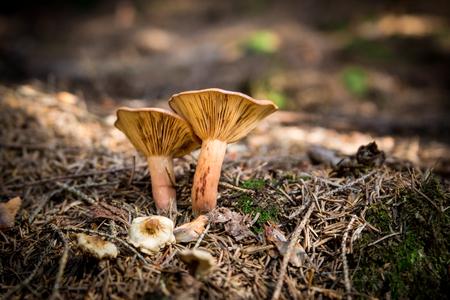 underwood: Autumnal mushrooms in underwood