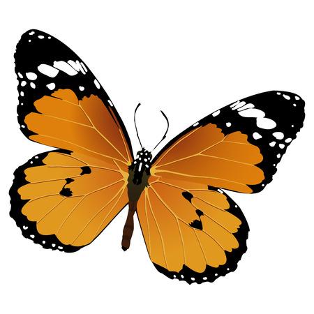 Volando de la mariposa