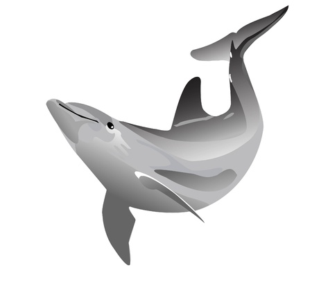 Dolphin graphic image Vector
