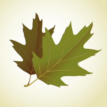 young leaf: Young leaf on background illustration Illustration