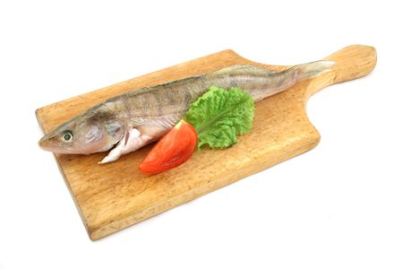 silver perch: fish on desk with lettuce and tomato