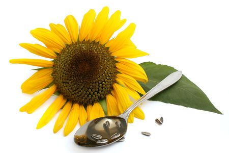 sunflower oil photo