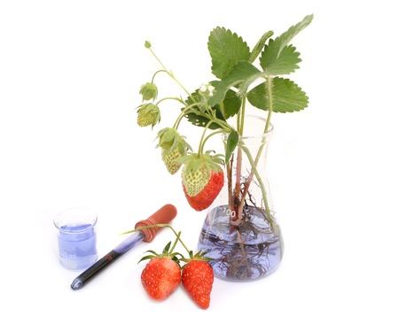 riesgo quimico: experimento de alimentos Foto de archivo