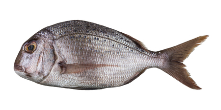 Raw fresh sea fish Dorado isolated on white background. Stockfoto