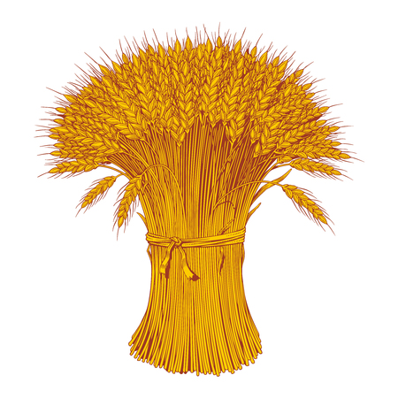 Sheaf of wheat enagraving. Yellow ears of wheat, barley or rye. Vector illustration.