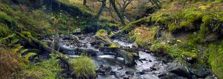 Stream in the national park. Moss trees and moss stones. Forest creek. Autumn. Connemara, Ireland. Stockfoto
