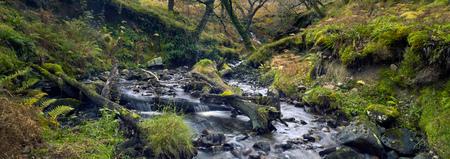 Streamen Sie im Nationalpark. Moosbäume und Moossteine. Wald Bach. Herbst. Connemara, Irland.
