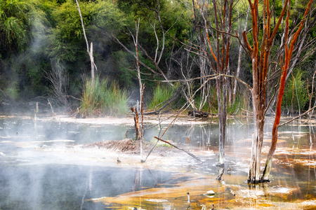 Colorful boiling hot volcanic lake with old dying trees standing in it. Rotorua, New Zealand