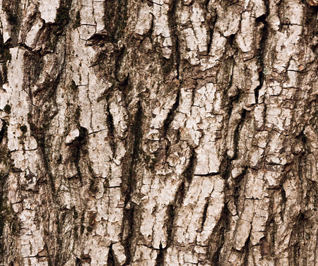 morose: the grey bark of the tree as background texture Stock Photo