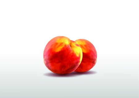 Two ripe peaches Illustration