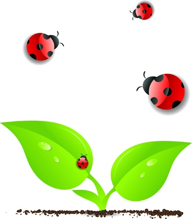 Green leaves with ladybug Stock Vector - 20386831