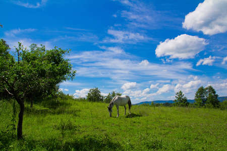 Landscape with white horse on pasture under the sun photo