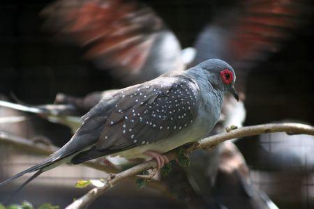 bring: Malaysia local bird