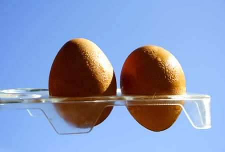 protien: Chicken eggs