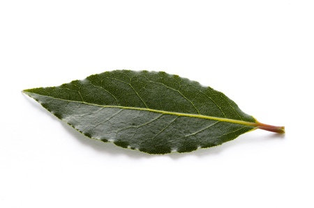 culinary bay leaves isolated on a white background Stock Photo