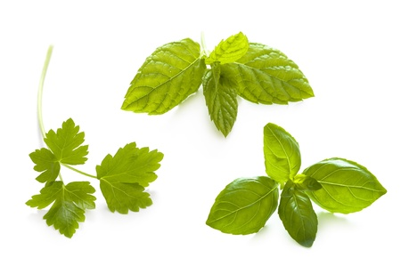 herbs isolated: flat leaved parsley, mint and basil photo