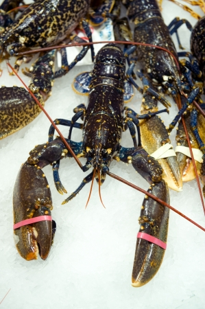 clawed: fresh lobster on a fishmonger stall