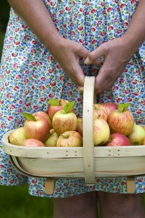 woman wearing a dress with a trug of fresh apples photo